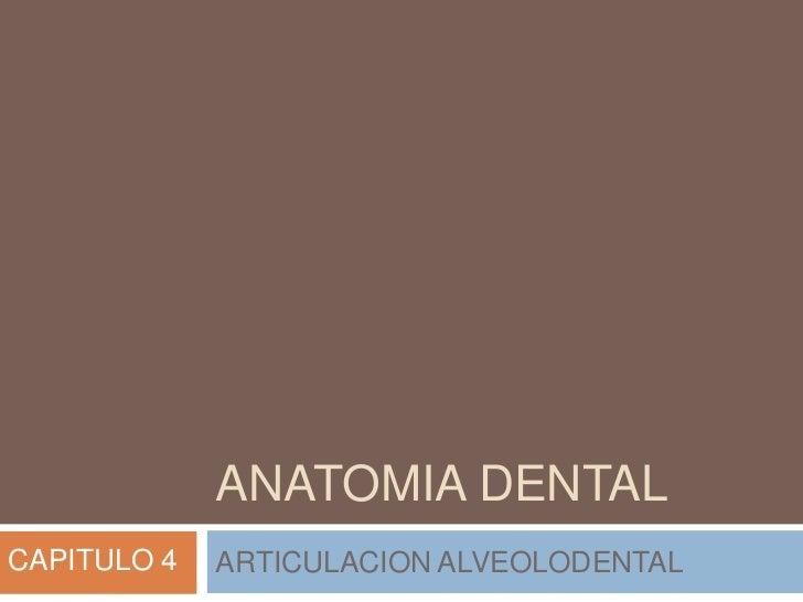 ANATOMIA DENTALCAPITULO 4   ARTICULACION ALVEOLODENTAL