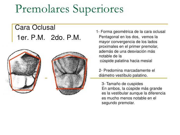 Anatomia dentariaal