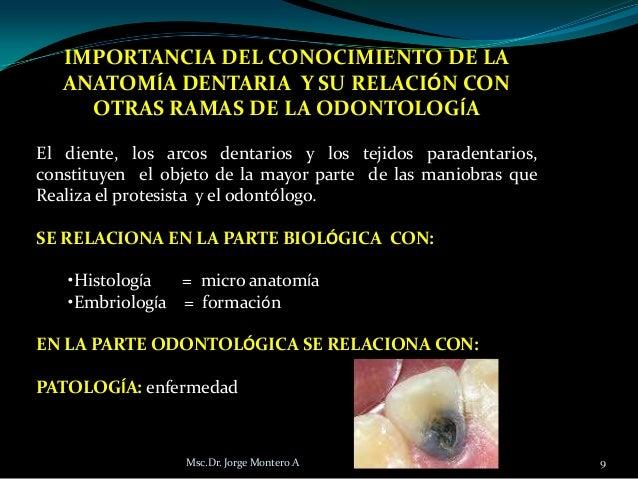Anatomia dentaria i