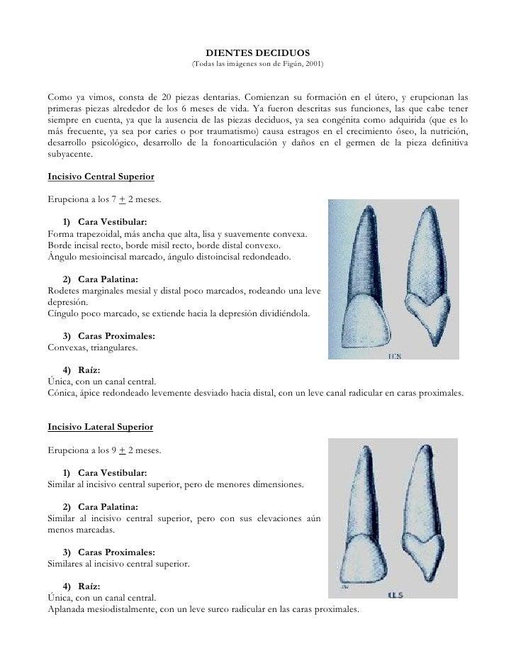 anatomia dentaria figun garino