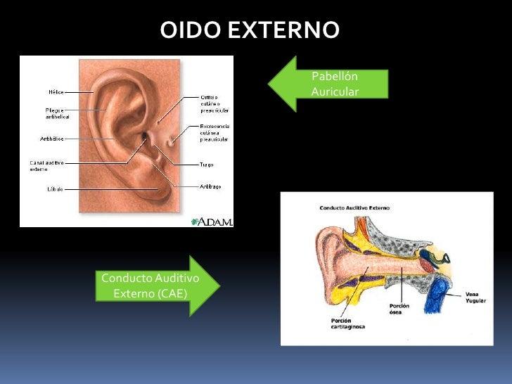 Anatomia De Oido, Nariz Y Laringe