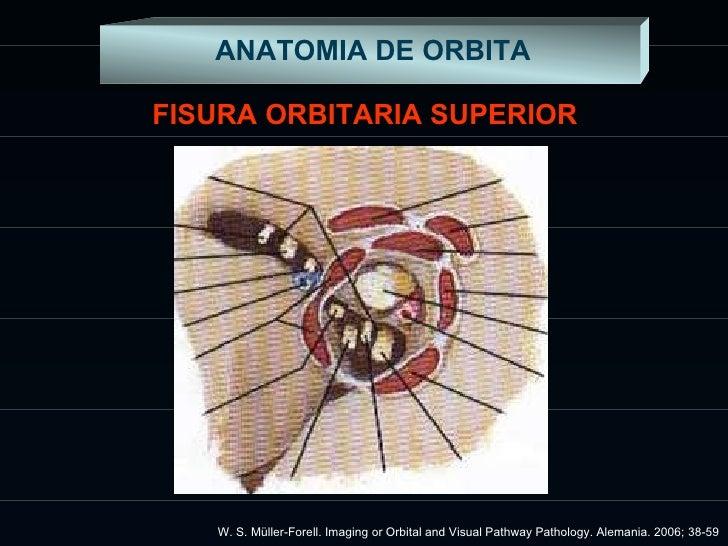 Anatomía de Orbita