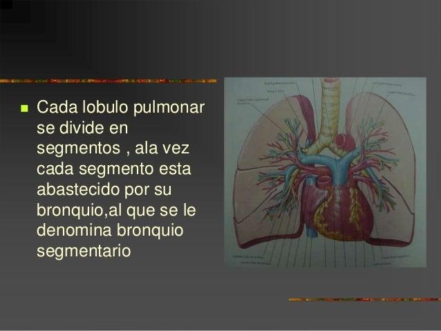Anatomia de pulmon ok