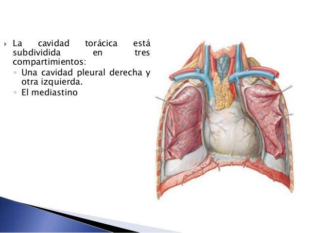 Anatomia de sistema respiratorio