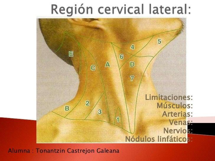Anatomia de superficie de cuello y dorso