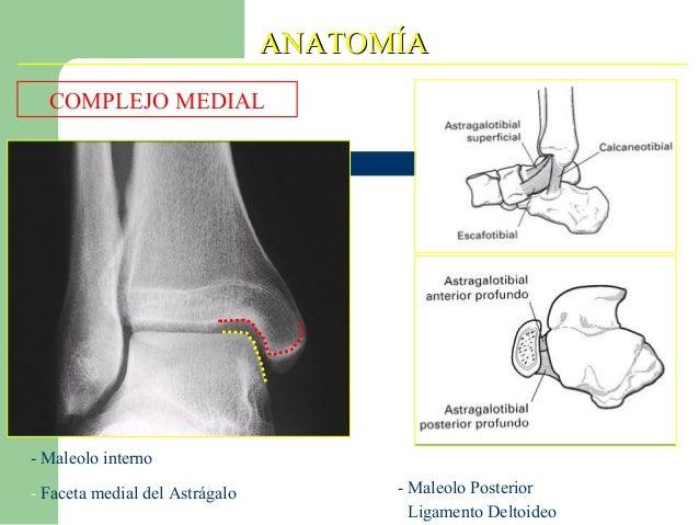 Anatomia de tobillo