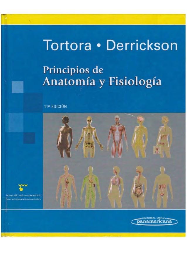 Anatomia de Tórtora