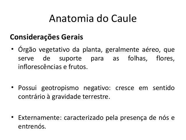Anatomia do CauleConsiderações Gerais• Órgão vegetativo da planta, geralmente aéreo, que  serve de suporte para as folhas,...