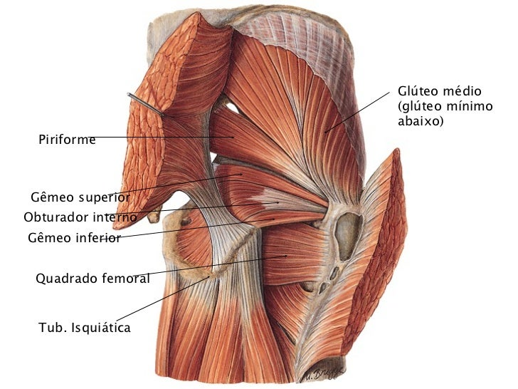 Increíble Anatomía Del Glúteo Mayor Ilustración - Anatomía de Las ...