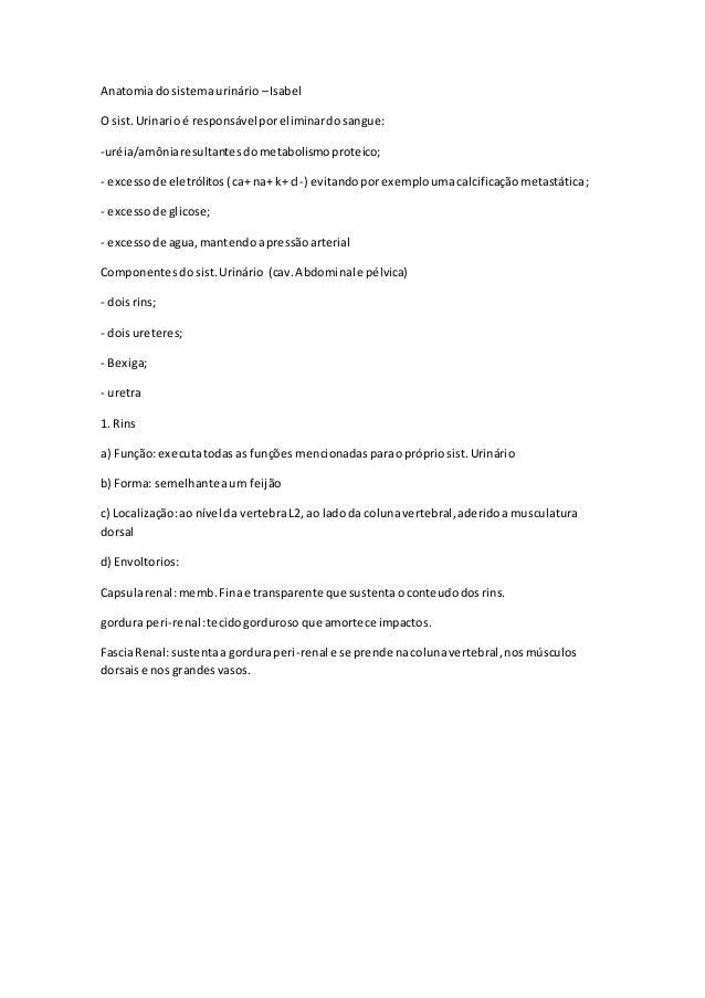 Anatomiadosistemaurinário –Isabel O sist.Urinarioé responsávelporeliminardosangue: -uréia/amôniaresultantesdometabolismopr...
