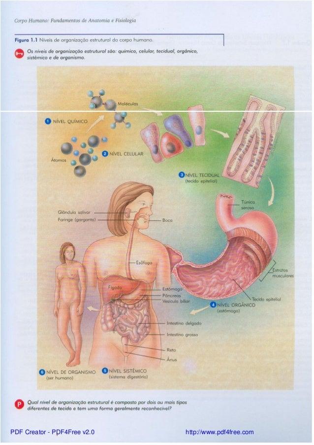 Magnífico Principios De La Anatomía Y La Fisiología 13ª Edición ...