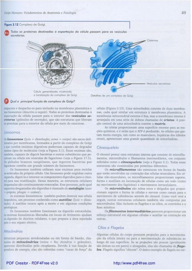 Contemporáneo Tortora Libro De Anatomía Y Fisiología Pdf Inspiración ...