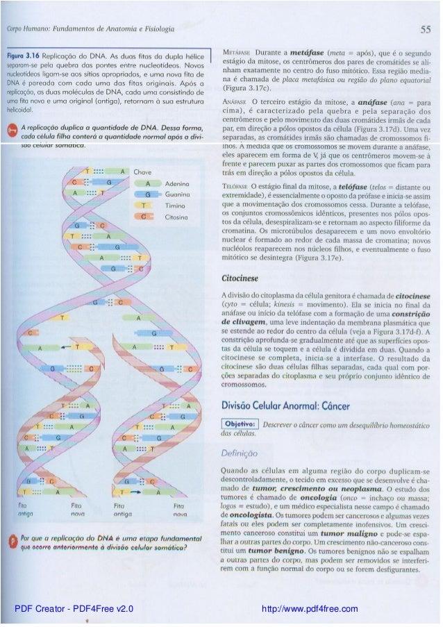 Excelente Tortora Libro De Anatomía Y Fisiología Pdf Viñeta ...