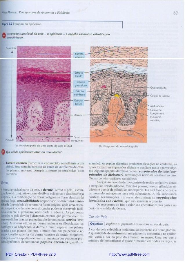 Dorable Tortora Anatomía Y Fisiología Concursos Ornamento - Anatomía ...