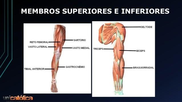 Anatomia E Fisiologia Do Sistema Muscular