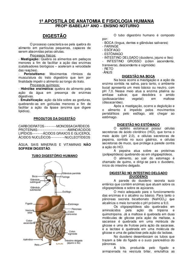 1ª APOSTILA DE ANATOMIA E FISIOLOGIA HUMANAPROFª ISABELA1ª ANO – ENSINO NOTURNODIGESTÃOO processo caracteriza-se pela queb...
