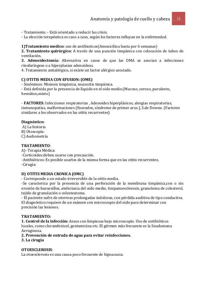 Excelente Sinónimos De La Anatomía Friso - Anatomía de Las ...