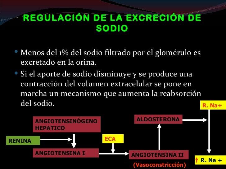 EXCRECIÓN DE LOS PRODUCTOS DEL   METABOLISMO NITROGENADO (PROTEÍNAS) Urea:   constituye casi la mitad del soluto urinari...