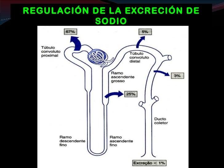 METABOLISMO NITROGENADO      Balance de nitrógeno           (PROTEÍNAS)Proteinas                                          ...