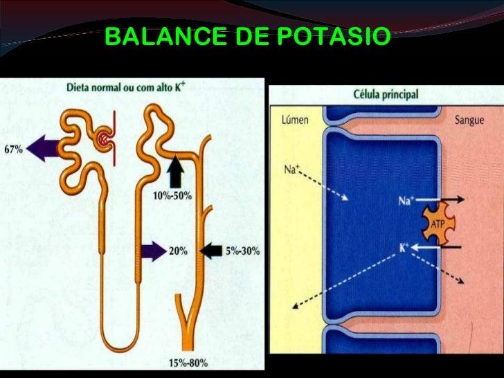 FUNCIONES ENDOCRINAS :EPO La eritropoyetina (EPO) es producida por el riñón. Actúa sobre las células precursoras de la s...