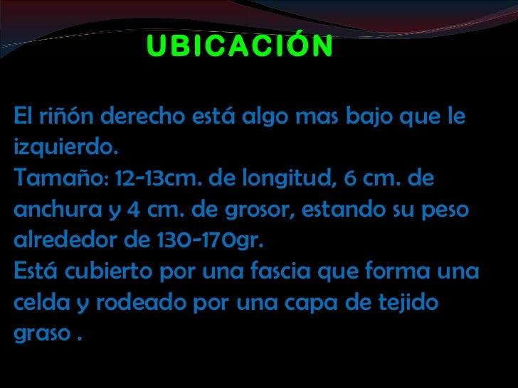 UBICACIÓNEl riñón derecho está algo mas bajo que leizquierdo.Tamaño: 12-13cm. de longitud, 6 cm. deanchura y 4 cm. de gros...