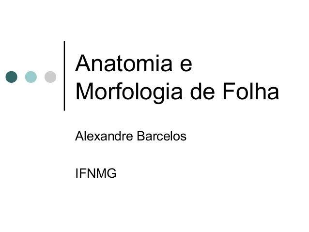 Anatomia e Morfologia de Folha Alexandre Barcelos IFNMG