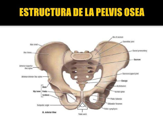 Anatomia en ginecología dr zegarra