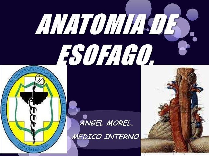 ANATOMIA DE ESOFAGO.<br />ANGEL MOREL.<br />MEDICO INTERNO.<br />