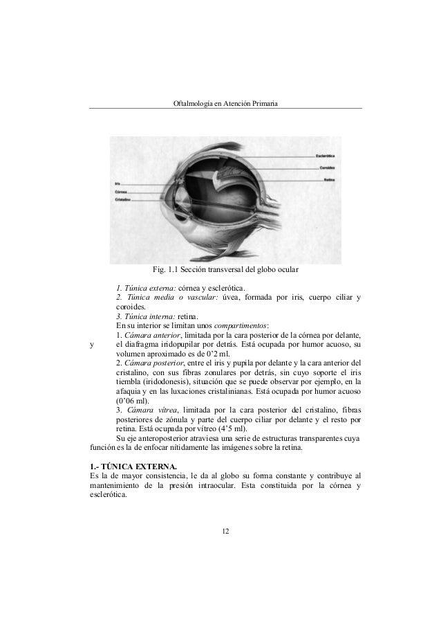 Anatomia fisica del aparato ocular