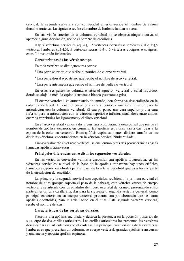 Vistoso Agujeros Anatomía Y Fisiología Humana Componente - Imágenes ...