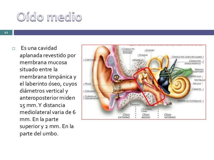 Anatomia fisiologia y exploracion del oido