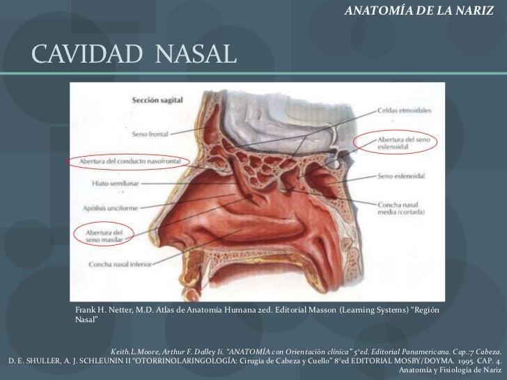 Vistoso Anatomía Y Fisiología Capítulo 1 El Cuerpo Humano Una ...