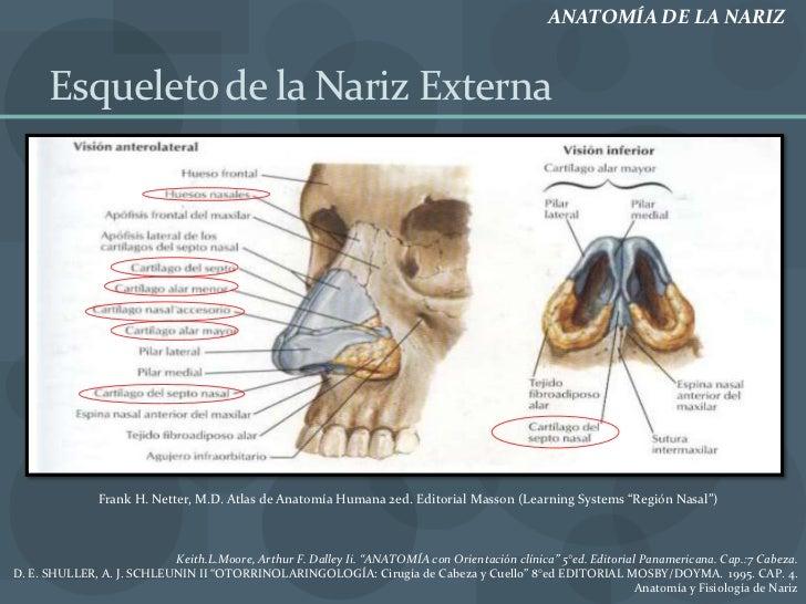 Anatomia fisiologia y exploracion de nariz
