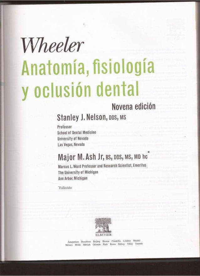 Anatomia, fisiologia y oclusión dental parte 1