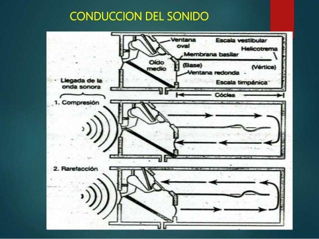 Anatomia Fisiologia y patologia del Oido