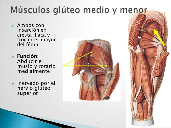 Asombroso Anatomía Cresta Ilíaca Bosquejo - Anatomía de Las ...