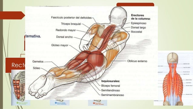 Anatomia funcional de la columna vertebral