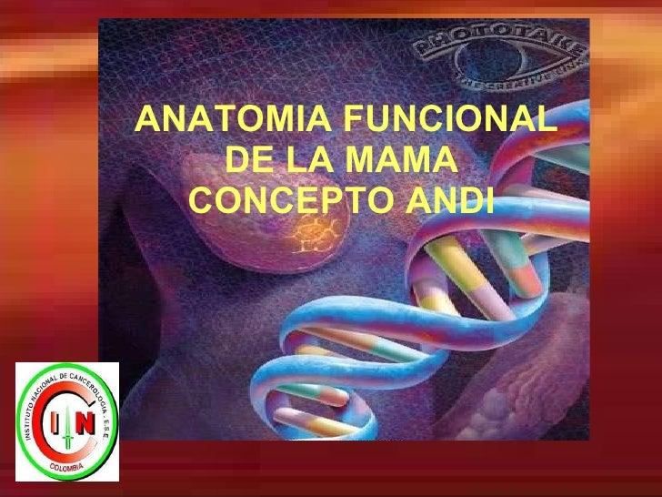 ANATOMIA FUNCIONAL DE LA MAMA   CONCEPTO ANDI