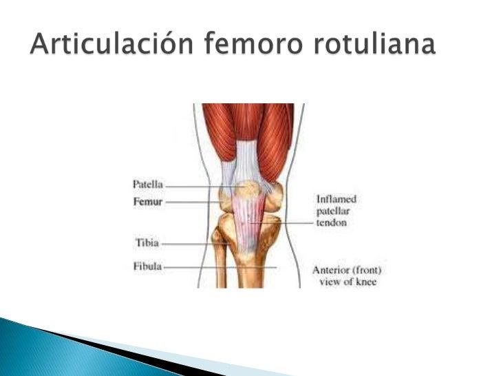 Anatomia funcional de la rodilla 2