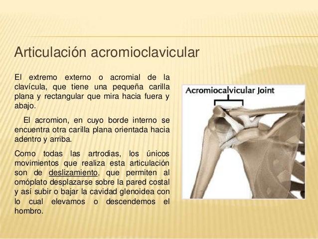 Anatomia funcional del hombro