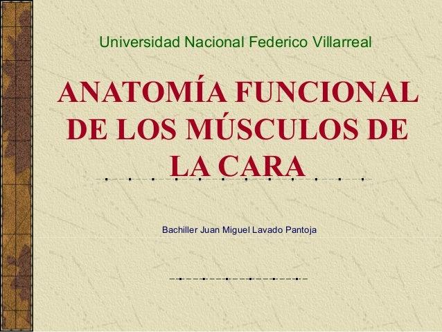 ANATOMÍA FUNCIONAL DE LOS MÚSCULOS DE LA CARA Bachiller Juan Miguel Lavado Pantoja Universidad Nacional Federico Villarreal