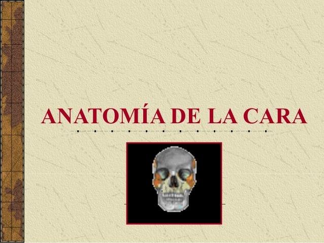 Anatomia funcional de los musculos de la cara Slide 2