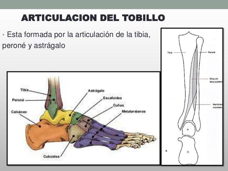 Famoso Huesos Anatomía Tobillo Galería - Anatomía de Las Imágenesdel ...