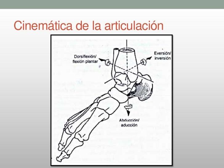 Anatomia funcional del tobillo y pie 1 ra parte