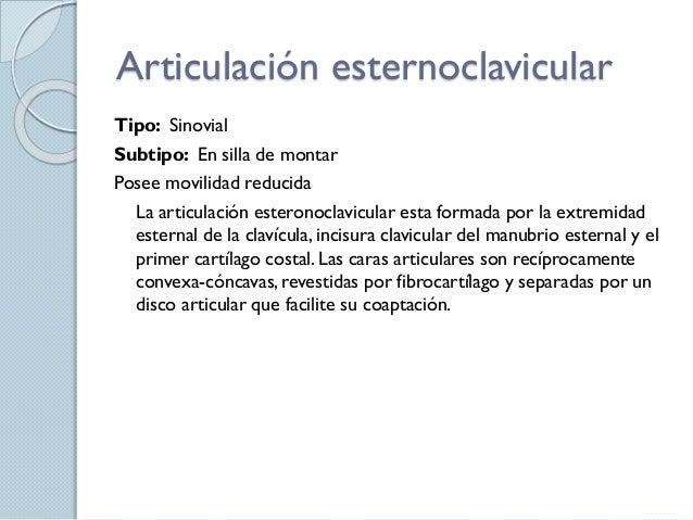 anatomia funcional liisto