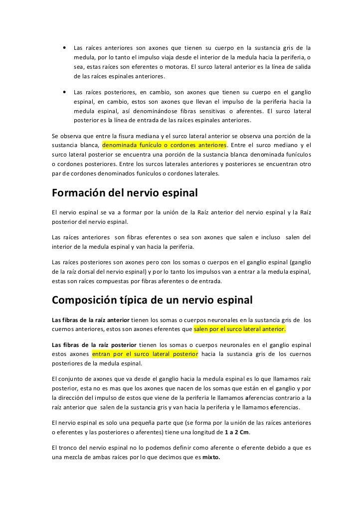 Fantástico Ganglio De La Raíz Dorsal De La Anatomía Embellecimiento ...