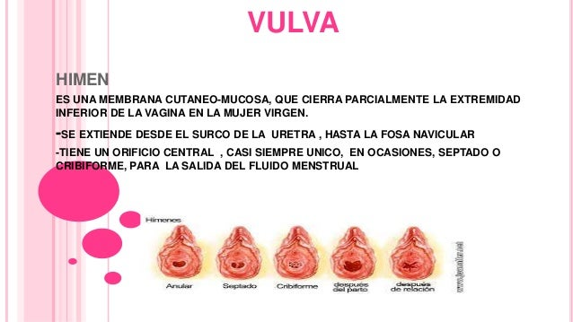 Anatomia genitales femeninos
