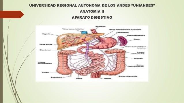 """UNIVERSIDAD REGIONAL AUTONOMA DE LOS ANDES """"UNIANDES"""" ANATOMIA II APARATO DIGESTIVO"""