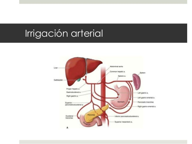 Anatomia, histologia y fisiologia