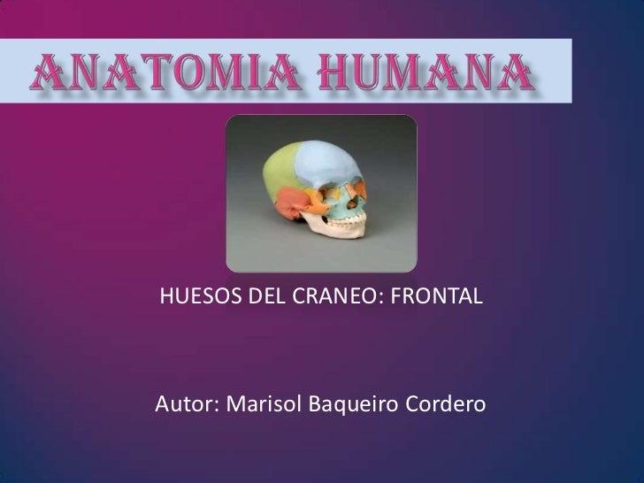 HUESOS DEL CRANEO: FRONTALAutor: Marisol Baqueiro Cordero